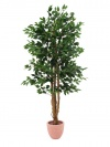 ficus benjamini 1260 bl tter 210cm k nstliche pflanzen. Black Bedroom Furniture Sets. Home Design Ideas