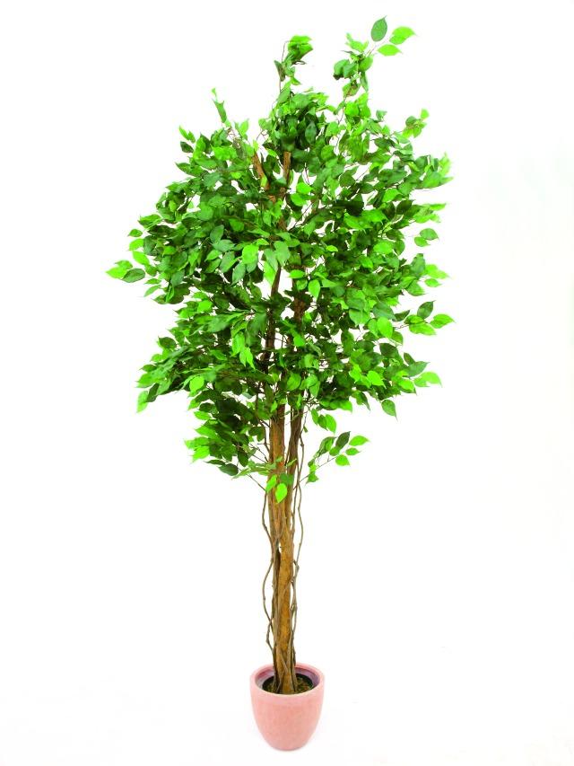ficus benjamini multi stamm k nstliche pflanzen kunstpalmen zimmerbrunnen. Black Bedroom Furniture Sets. Home Design Ideas