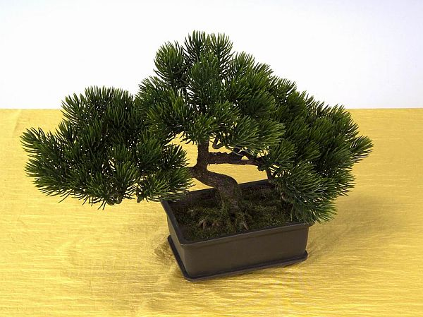 bonsai topf szechuanpfeffer bonsai 15 cm topf online. Black Bedroom Furniture Sets. Home Design Ideas