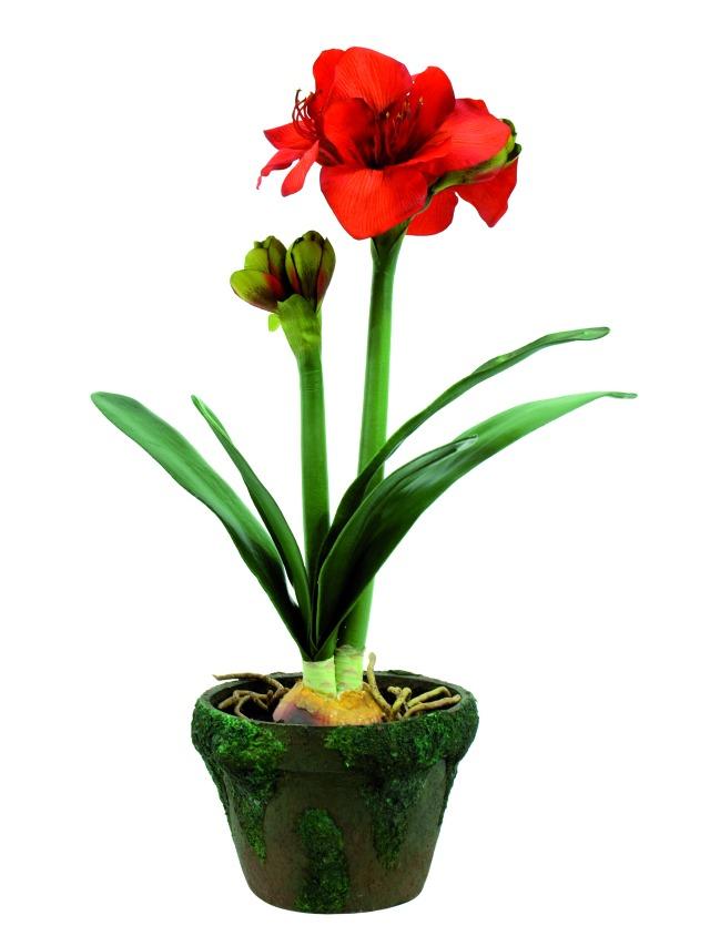 wundersch ne naturgetreue amaryllis in einen topf mit. Black Bedroom Furniture Sets. Home Design Ideas