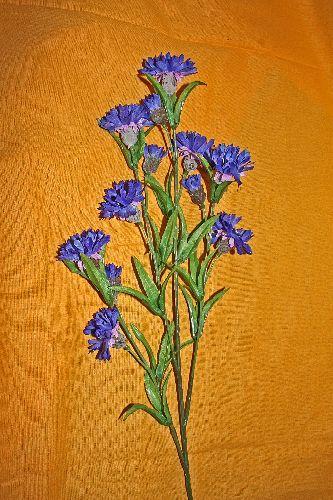 in weiter wald wiesenflur darf die seltene blaue kornblume mit 12 bl ten und 4 k nstliche. Black Bedroom Furniture Sets. Home Design Ideas